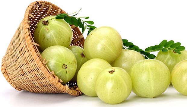 Amla remedy for premature graying of hair