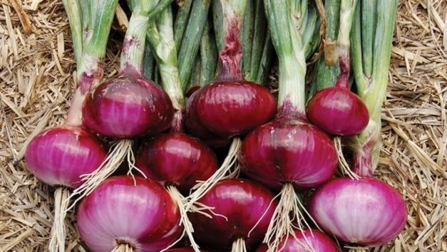 Onion Juice for Hair Growth, How to Use, Reviews, Before and After Picture, Side Effects, Benefits