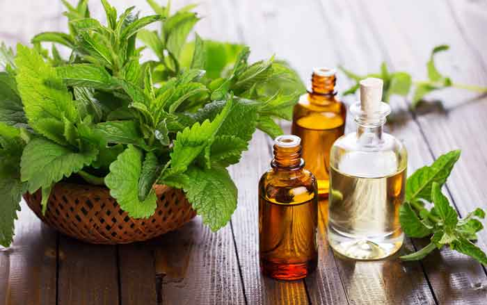 Best-essential oil for hair peppermint